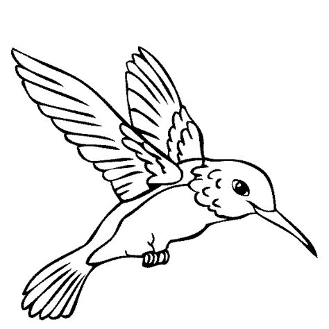 color book humming birds hummingbird coloring page