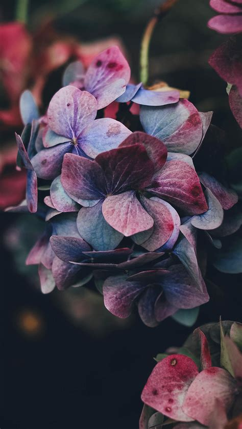 Iphone 6 Flower Wallpaper Hd by For Iphone X Iphonexpapers