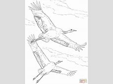 Flight Free Colouring Pages
