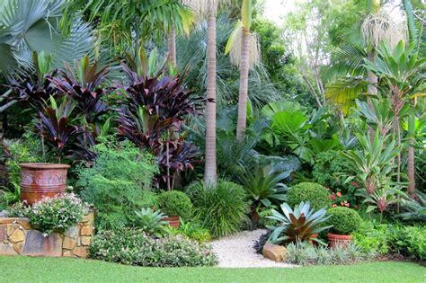 subtropical garden design ideas trachelospermum jasminoides variegatum nandina domestica bismarkia palm cordyline negra