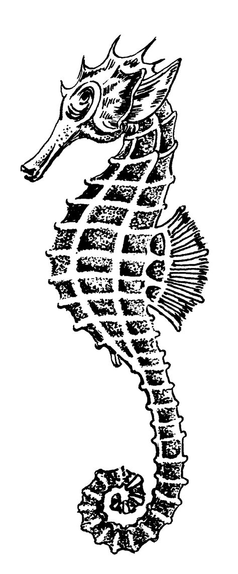 seahorse clipart black and white seahorse outline printable clipart best