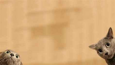 48 Hd Funny Wallpapers 1080p On Wallpapersafari
