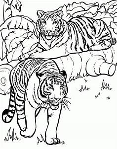 Realistic And Detailed Coloring Page Of Tiger For Older