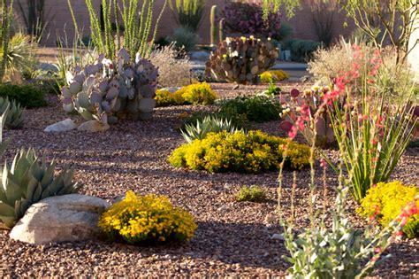 mesa desert landscaping xeriscape az landscape creations