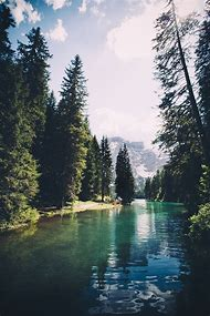 Tumblr Nature Photography Forest