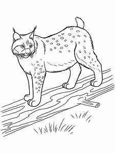 Lynx Coloring Pages Download And Print Lynx Coloring Pages