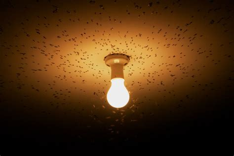 rid  flying insects attracted  lights   home