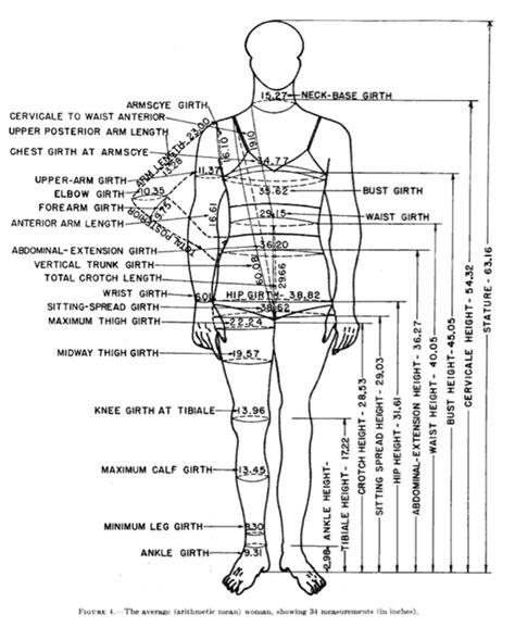 short history   white womens measurements