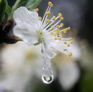 File:A flower refracted in rain droplets.jpg - Wikimedia ...