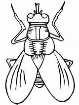 Insect Coloring Pewarna Halaman Serangga Pewarnaan Fly sketch template
