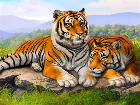 tiger couple wallpaper hd  wallpaperscom