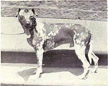 メキシカン・ヘアレス・ドッグとは - goo Wikipedia (ウィキペディア)