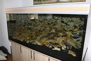 Aquarium Kies Kaufen : malawi buntbarsch aquarium 150x60x60 540l in fellbach fische aquaristik kaufen und verkaufen ~ Orissabook.com Haus und Dekorationen
