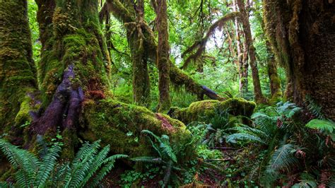 tropical rainforest wallpapers  background pictures