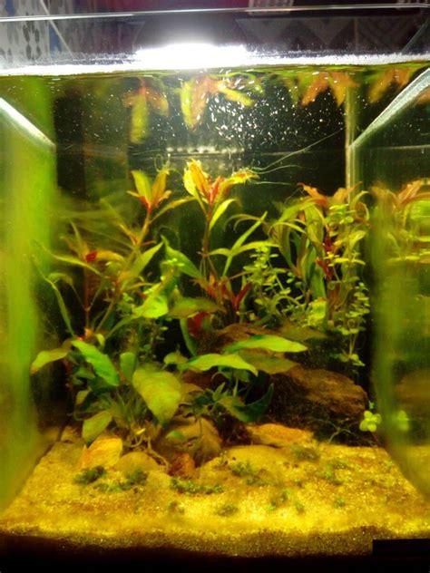 les algues fl 233 au de l aquariophile d eau douce forum plantes