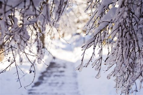 Snow Lights by Winter Snow Branches Light Wallpaper 2048x1365 132809