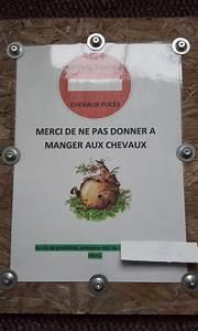 Que Donner A Manger A Un Ecureuil Sauvage : affiches pancartes de pr s ~ Dallasstarsshop.com Idées de Décoration