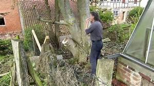 Alten Walnussbaum Schneiden : baum f llen mit der schrots ge nu baum schneiden youtube ~ Lizthompson.info Haus und Dekorationen