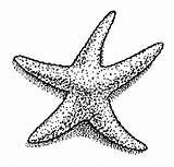 Starfish Coloring Pages Printable Getcoloringpages sketch template