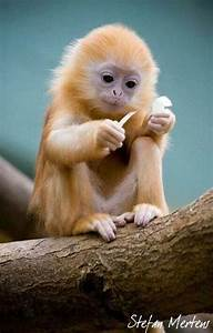 Cute baby monkey | Animales exoticos | Pinterest