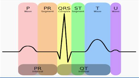Figure Schematic Diagram Normal Sinus Rhythm For
