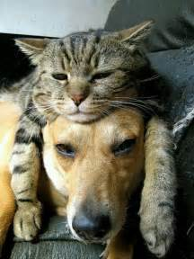 cats and dogs 15 pics proving that cats and dogs can be best friends