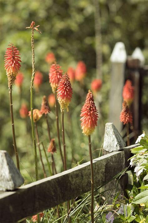 blumen lange blütezeit blumen die lange bl 252 hen