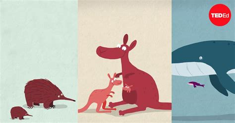 Kate Slabosky: The three different ways mammals give birth