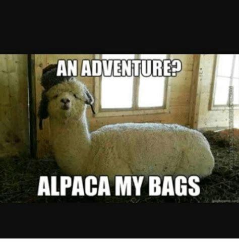 Alpaca My Bags Meme - an adventure alpaca my bags meme on sizzle