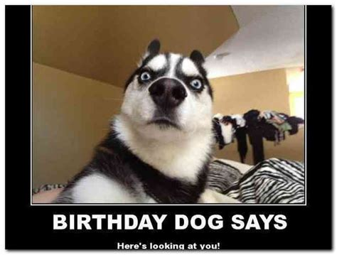 Dog Birthday Meme - dog birthday meme happy birthday meme with dogs posted in birthday by grandy