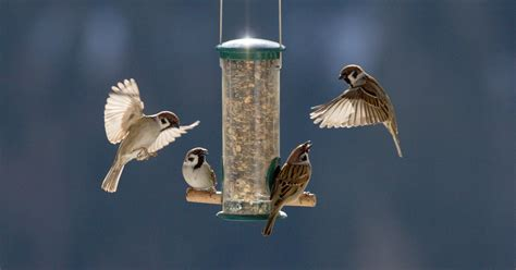 Officials Ask For Assistance Protecting Wild Birds From