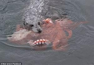 Photographer Bob Ianson captures struggle between seal and ...