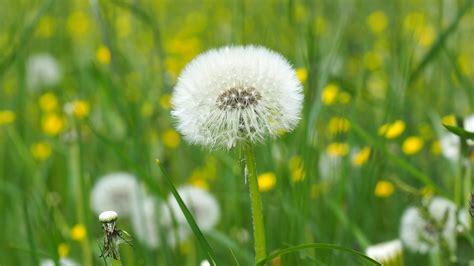 drink  weeds greta hill wellness