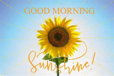 good morning sunflower  good morning ecards greeting