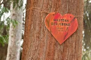 Le Cedre Rouge : quel bois est pr f rable pour un rev tement ext rieur d 39 un ~ Melissatoandfro.com Idées de Décoration