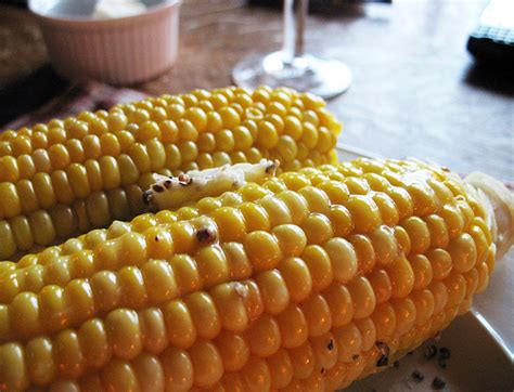 microwave corn on the cob how to cook corn on the cob in the microwave