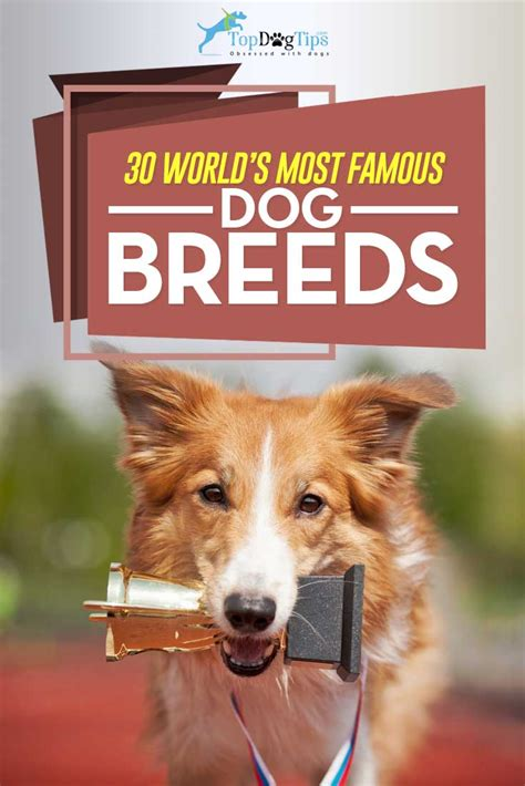 Top Breeds That Shed The Most by Top Breeds That Shed The Most 54 Images The Most