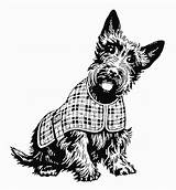 Terrier Scottish Coat Scottie Plaid Dog Coloring Clip Clipart Adult Dogs Cartoons Vector Scotty Schnauzer Grafiken Illustrations Skotsk Symbole Getty sketch template