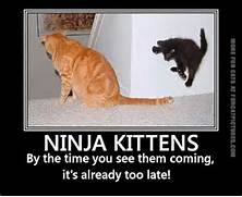 funny-cat-pics-ninja-k...