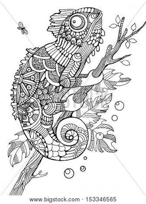 Chameleon Coloring Vector & Photo (Free Trial) | Bigstock