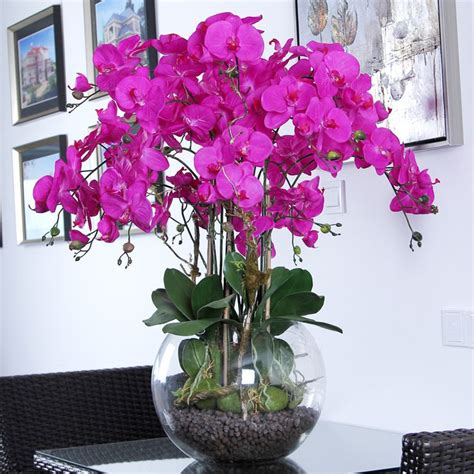 how to care for orchids the 25 best orchids ideas on pinterest orchid flowers orchid plant care and how to grow orchids