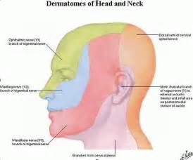 Shingles Dermatome Head