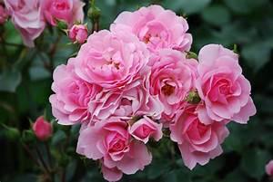 Pin Bloemen Achtergronden on Pinterest
