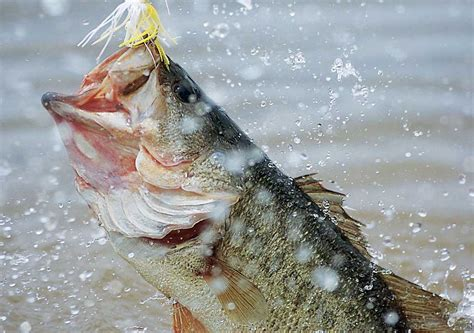Bass Fishing Wallpaper Backgrounds Wallpaper Cave HD Wallpapers Download Free Images Wallpaper [1000image.com]
