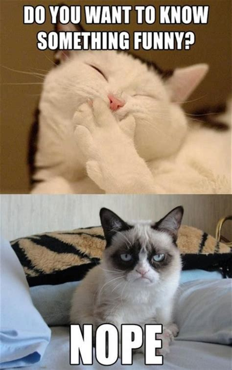 Funny Grumpy Cat Memes - 30 funny jokes that will make you laugh stylopics