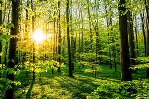 Waldbaden ist gesund 12 Gründe für den Waldspaziergang  Gesundheitstrends