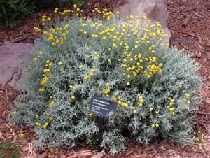 Yellow Flower Shrubs