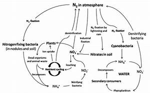 Nitrogen Fixation Cycle In Atmosphere