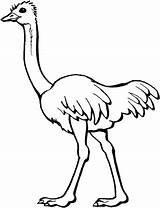 Ostrich Coloring Pages Printable Categories sketch template