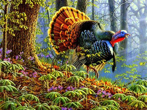 animal wallpapers wild turkey wallpaper pictures